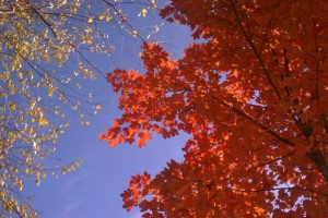 Weather Channel video: Fall in Asheville