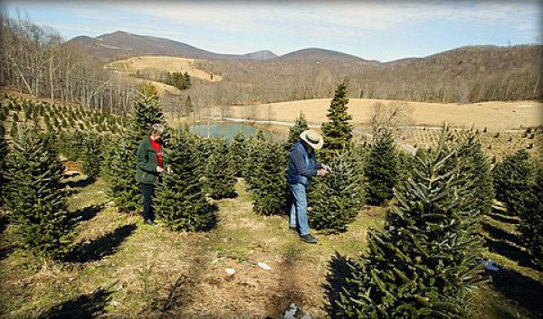 press release here - Christmas Tree Shopping