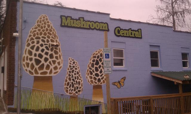Fungi9