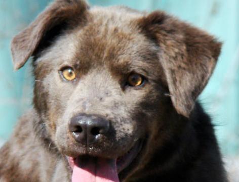 Ashvegas Pet of the Week: Meet Grady