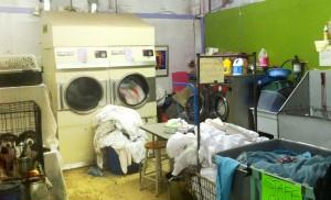 bwar_laundry_2013