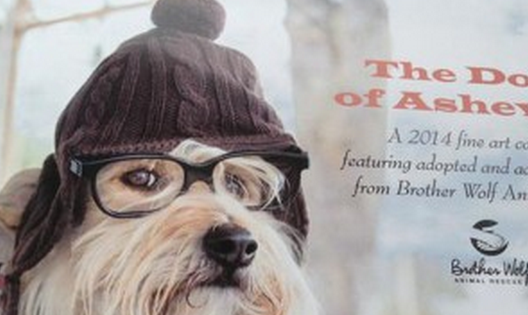 Dogs of Asheville Calendar now on sale online, at Patton Avenue Pet Company