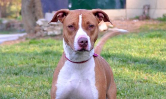 Ashvegas Pet of the Week: Ginger, sweet to all people she meets