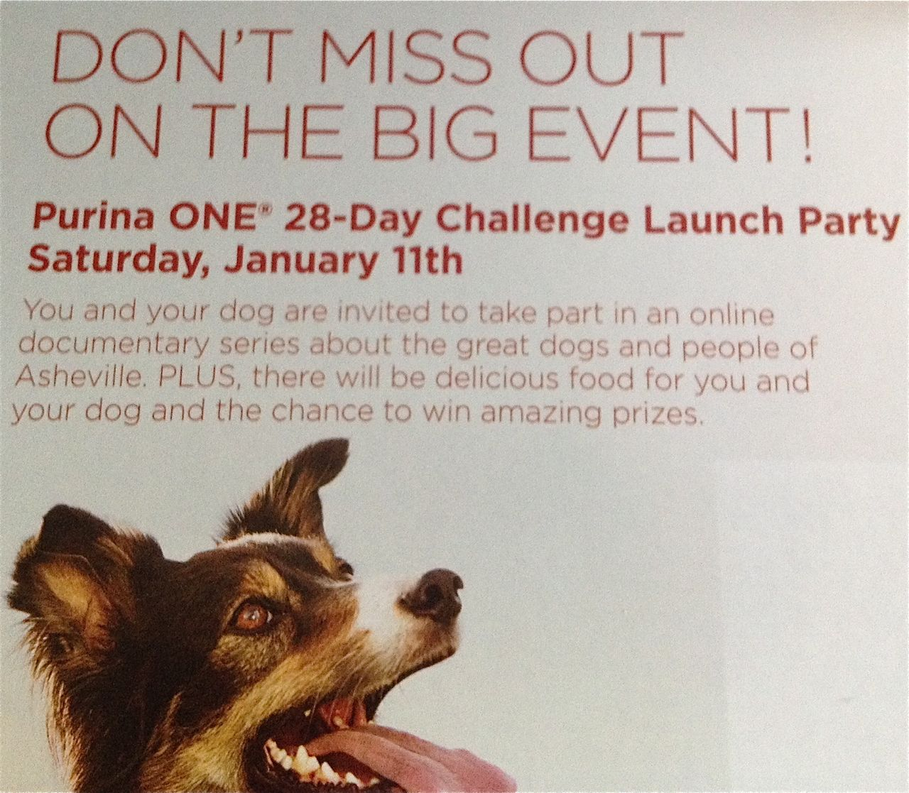 Purina to launch marketing push on Jan. 11 in downtown Asheville