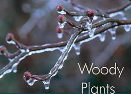 WNC Alliance and native plant specialist Ron Lance offer winter plant hike Saturday