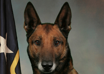 Asheville police dog Diego dies from complications related to surgery