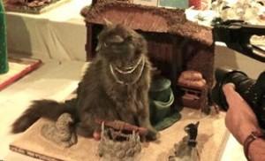asheville_cat_video_tourism_2014