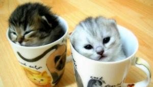 cat_cafe_2015