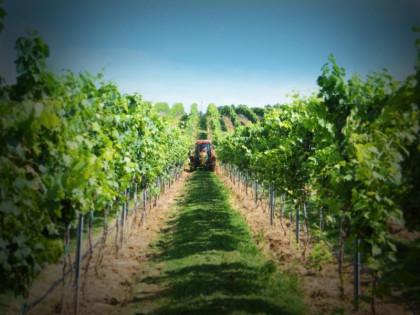 Chestnut Asheville to Host Jones vonDrehle Vineyards Wine Dinner