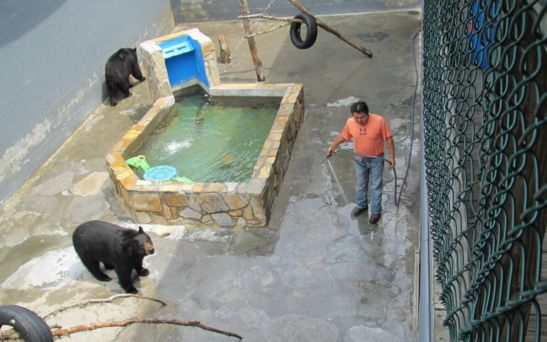 Bear pits survive at Cherokee Bear Zoo, for now, in wake of lawsuit dismissal