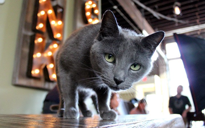 Suds the brew cat protects beer and buddies up at Hendersonville's Sanctuary Brewing