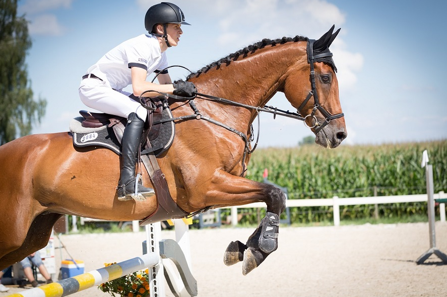 2018 World Equestrian Games in Tryon expected to be N.C. economic boon