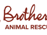 Brother Wolf Animal Rescue to sell shelter, temporarily stop taking animals