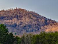 Photo courtesy of Carolina Nature Photographers Association